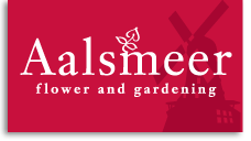 aalsmeer flower and gardening